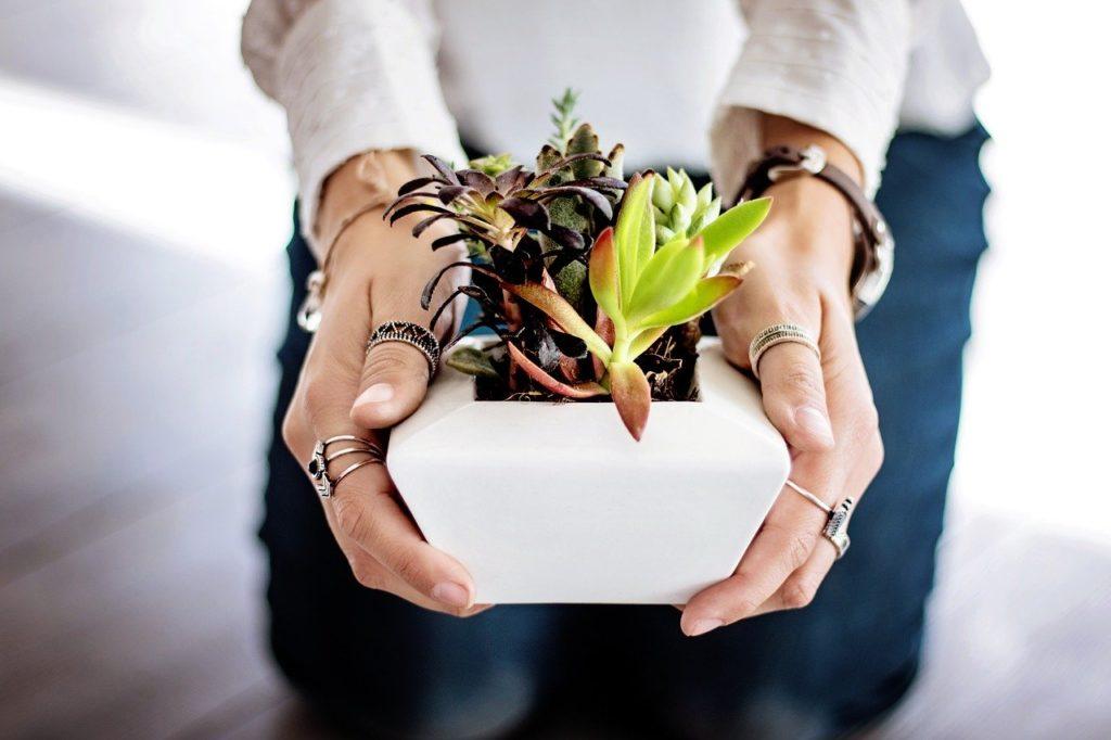 succulents, hands, woman