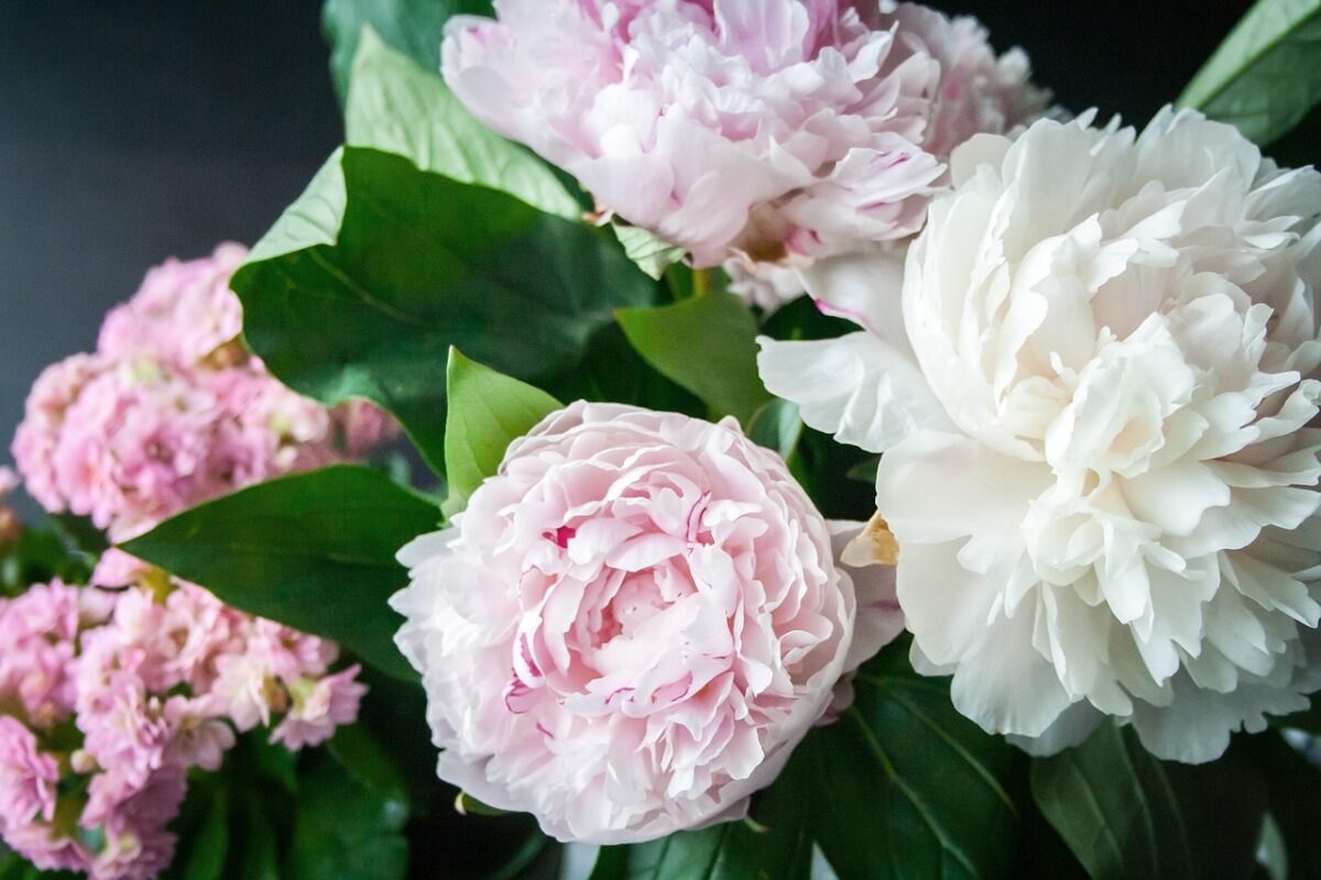 flower, peony, blossom,gifts, background, decoration, 13 Practical Housewarming Gifts They Will Love: Unique and Thoughtful Gifts For New Homeowners, budget, present, bachelor, cheap gifts